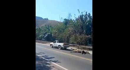 Animais teriam sido arrastados pela rodovia