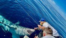 Cena insana! Tubarão tenta destruir barco e acaba ganhando carinho