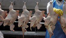 Abates de frangos esuínos batem recorde no primeiro trimestre
