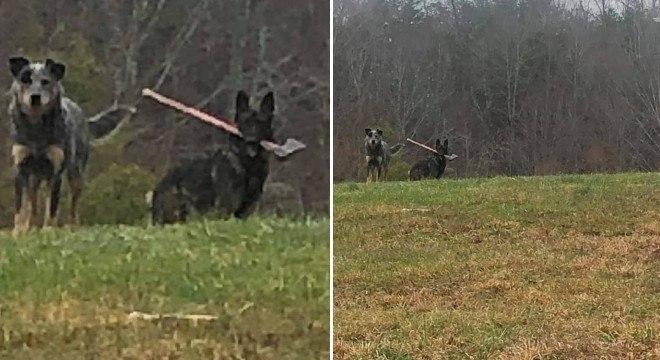 Carteiro flagra flagrou cão com machado na boca em cidade do Kentucky (EUA)