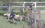 As tarefas rurais, muitas vezes cansativas, pareciam um show de comédia quando Cartolouco estava presente. Era