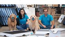 Sanitário para pets tem tecnologia que leva xixi direto para o ralo