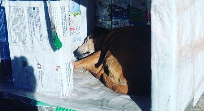 Primeira casinha de cachorro instalada em uma rua da cidade Morena
