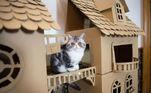 Os gatinhos parecem ter gostado das novas casinhas e posaram charmosos para as fotos