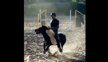 Cavaleiro brasileiro é suspenso por maus tratos aos animais
