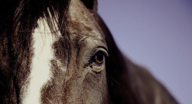 Cavalo, batizado Franco do Pec, é um reprodutor de alto valor genético