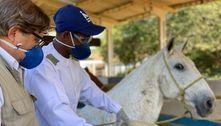 Soro de cavalo contra covid pode ser testado em breve em humanos