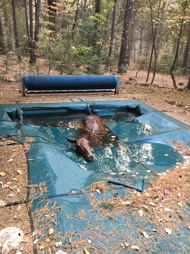 Cavalo se esconde em piscina para fugir de incêndios na Califórnia