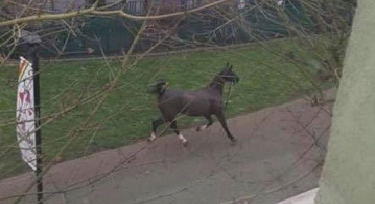 Um cavalo descontrolado foi flagrado sem rumo por um morador local