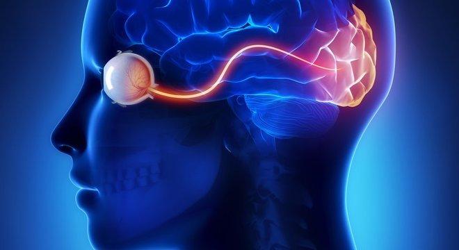 O córtex visual processa os estímulos que entram pelos olhos