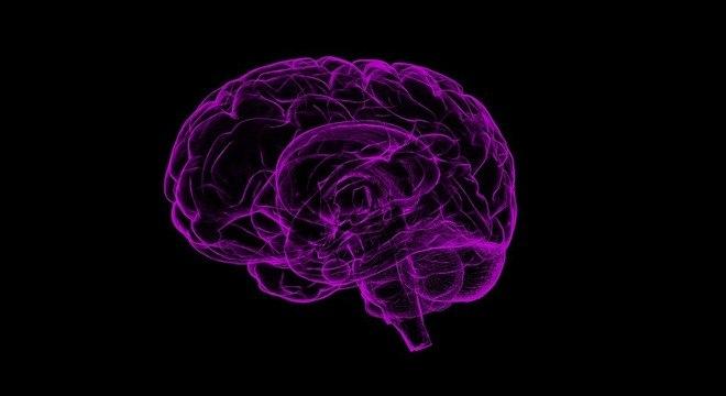 Treinamento modifica as conexões neuronais em tempo recorde