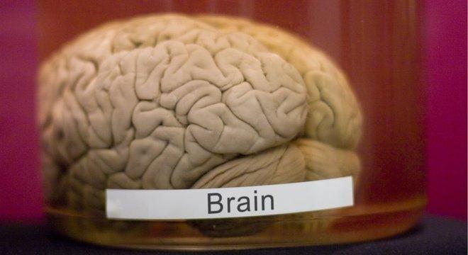 A longo prazo, os cientistas esperam encontrar melhores formas de proteger o cérebro após traumas
