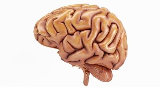 Viver com metade do cérebro não repercute na saúde, segundo estudo