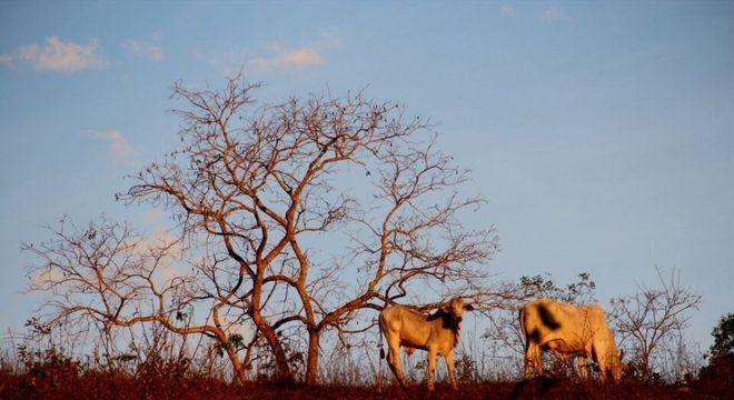 Cerrado - Características do bioma terrestre, localização e importância