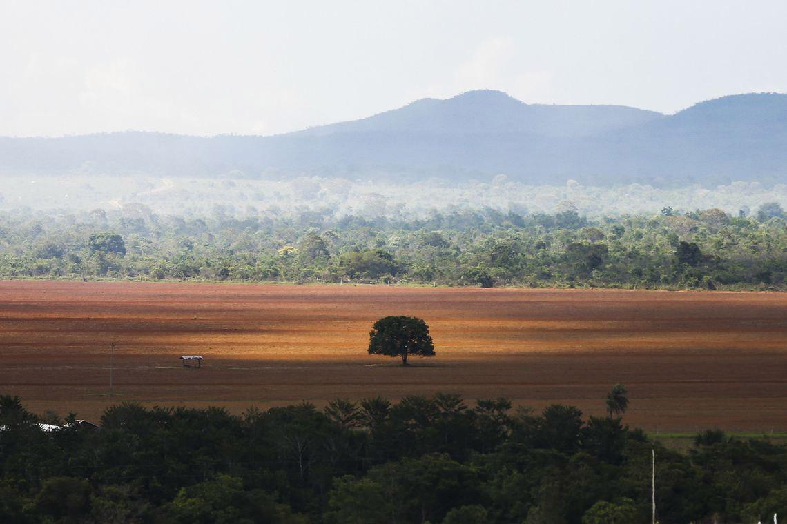 Agronegócio faz do cerrado o bioma mais ameaçado das Américas ...