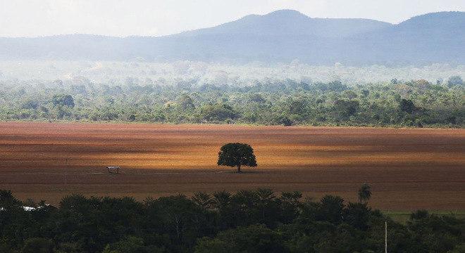 Área de cerrado desmatada para plantio no município de Alto Paraíso (GO)