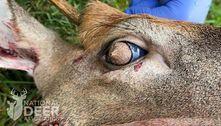 É impossível não ter pesadelos após ver esse cervo com olhos peludos