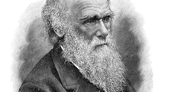 'Darwin ficou encantado com a nossa biodiversidade. A Mata Atlântica foi o bioma mais rico que ele conheceu. Por outro lado, ficou revoltado com a escravidão. Sua família lutava contra o comércio de escravos', afirma o biólogo Nélio Bizzo