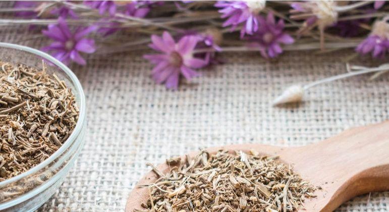 Chás para dormir, conheça as melhores ervas para ajudar no sono