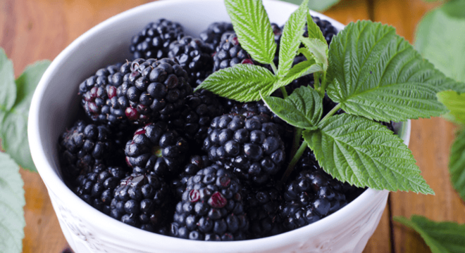 Chás para menopausa: Chá de amora