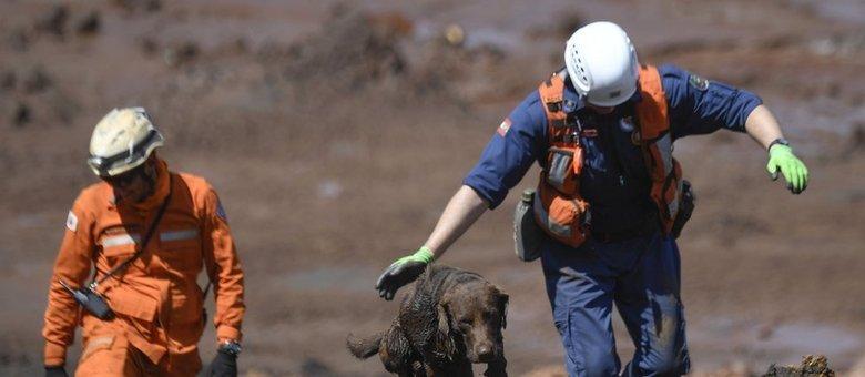 Bombeiros contam com ajuda de quatro cães farejadores nas buscas