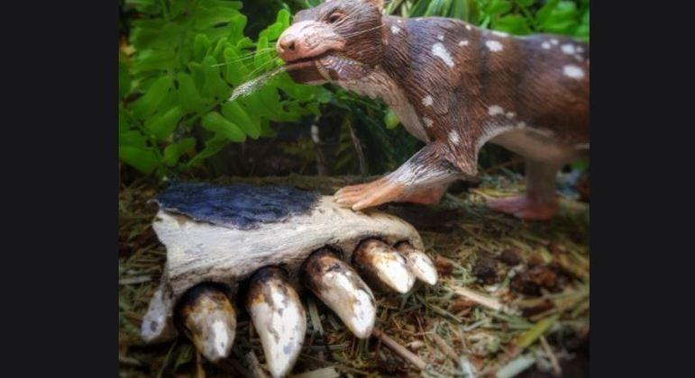 Cientistas encontraram pedaço de mandíbula na Patagônia chilena