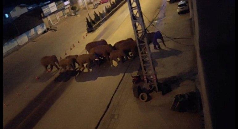 Grupo de elefantes viajou mais de 500 quilômetros dentro da China