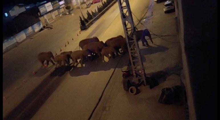 China usa bananas para guiar manada de 14 elefantes  e monitora o trajeto por drones