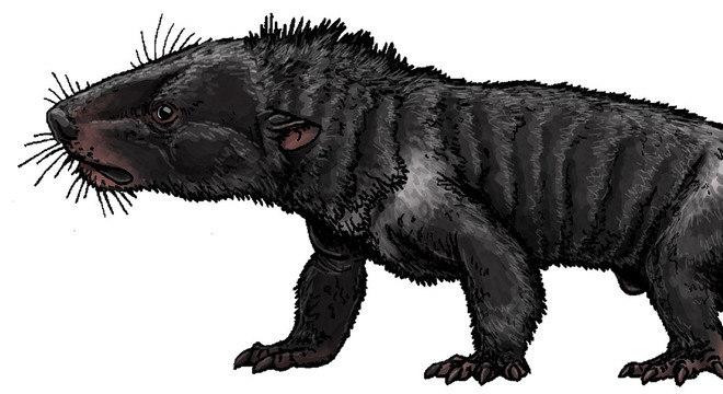 Do tamanho de um cão Labrador, o Chiniquodon theotonicus era um feroz predador
