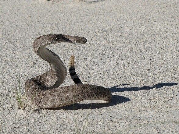 Cobra gigante sai do mar e aterroriza visitantes em praia
