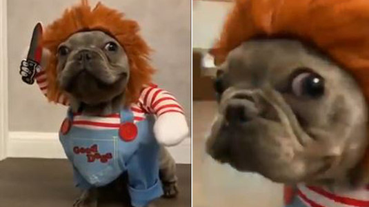 Que medo! Cachorro fantasiado de Chucky faz sucesso na web (Montagem/Reprodução )