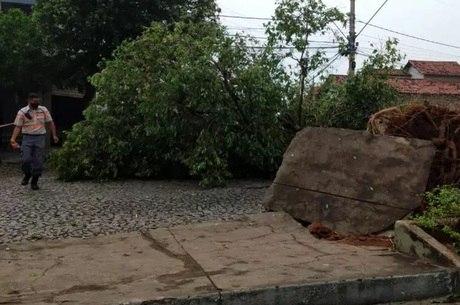 Árvores caíram em vários pontos da cidade
