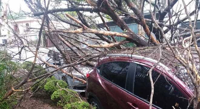 Árvore cai sobre dois carros na avenida Silvio Portugal, no Pacaembu, zona oeste de SP