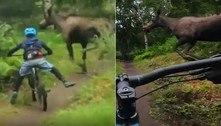 Ciclista mirim quase colide com alce destrambelhado durante trilha