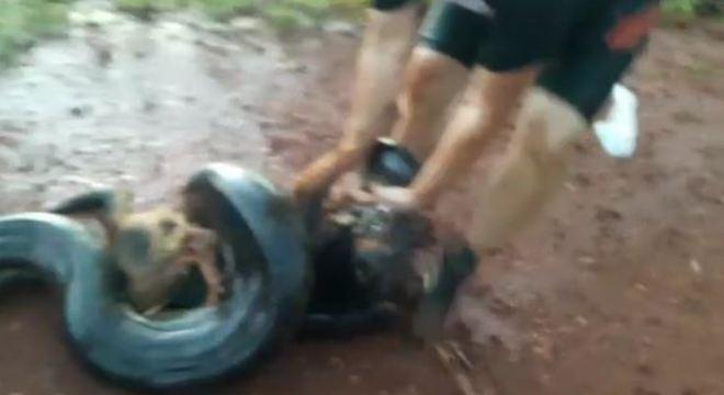 Ciclistas salvam cachorro de ser devorado por sucuri em São Paulo