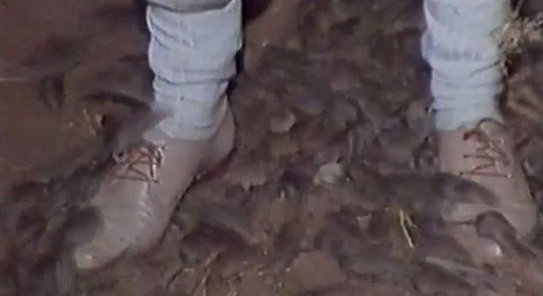 Cidade no interior da Austrália vive situação caótica após ser invadida por ratos