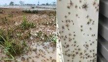 Cidades são tomadas por aranhas após chuvas recordes e inundações