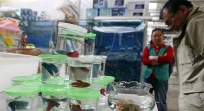 Suíça progride com fim de experiências em peixes vivos