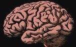 A altura de alguém influencia mais no tamanho cerebral que o sexo dela, afirmaBerkowitzVALE SEU CLIQUE: Veja imagens do retorno dos astronautas da Nasa à Terra