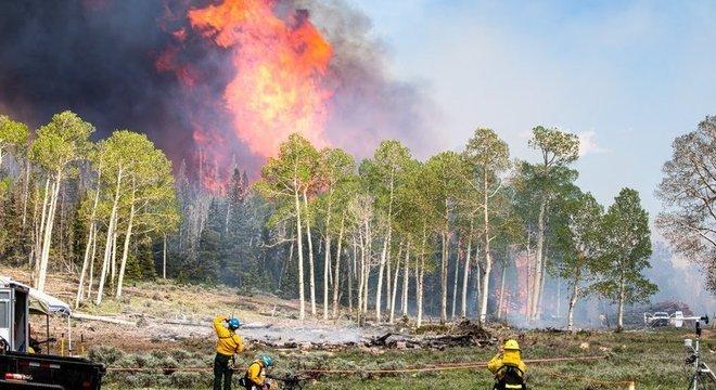Fumaça dos incêndios florestais pode ser uma nova rota de disseminação de micróbios