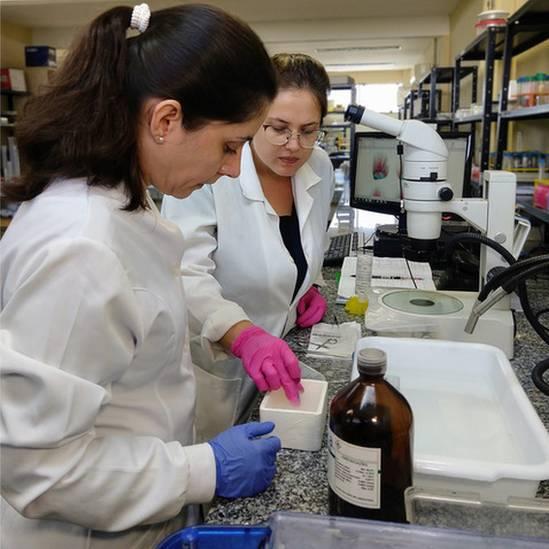 Cientistas fizeram amputações em pontos-chave para testar regeneração