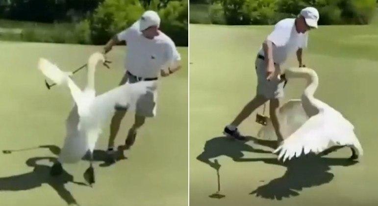 Cisne selvagem e descontrolado partiu para cima de jogador de golfe, na Geórgia (EUA)