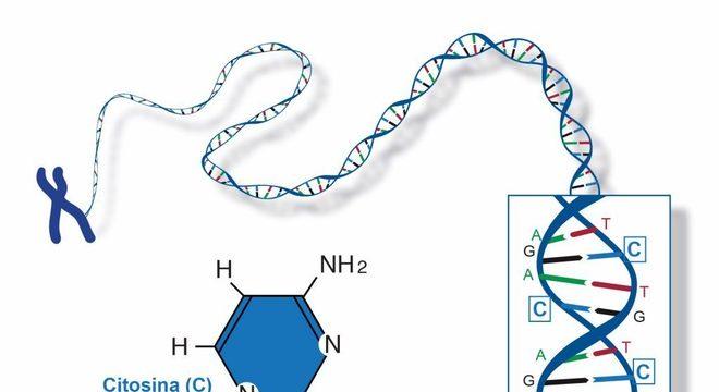 Citosina, o que é? Estrutura, história e importância