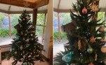 Um coala fêmea invadiu uma casa de Adelaide, na Austrália, e se aninhou em uma árvore de Natal montada no local