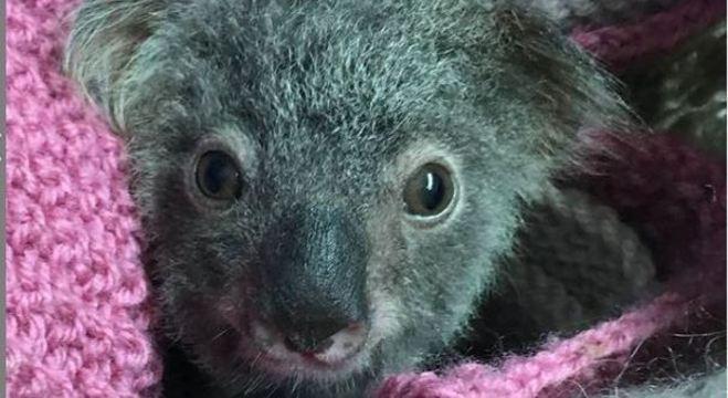 Hospital de Coalas de Port Macquarie já recebeu milhões em doações