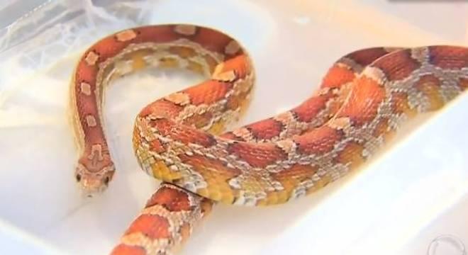 Jovem é suspeito de participar do comércio ilegal de cobras