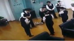 Cobra gigante cai do teto de banco e interrompe reunião de funcionários ()