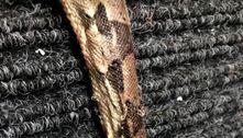 Cruel! Homem é preso após enfiar chave de fenda na cabeça de cobra