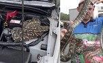 Uma australiana da região deSunshine Coast ficou apavorada ao ver em seu carro quatro bilhetes que alertavam para a presença de uma cobra em seu carro!
