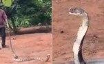 Um cobra-rei com o comprimento equivalente ao de uma Kombi foi resgatada de dentro de um poço, em um vilarejo do distrito deGanjam, na ÍndiaVeja também:Papagaio antecipa detector de fumaça e salva morador de incêndio